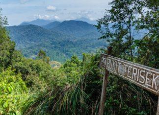 jungle's in Malaysia
