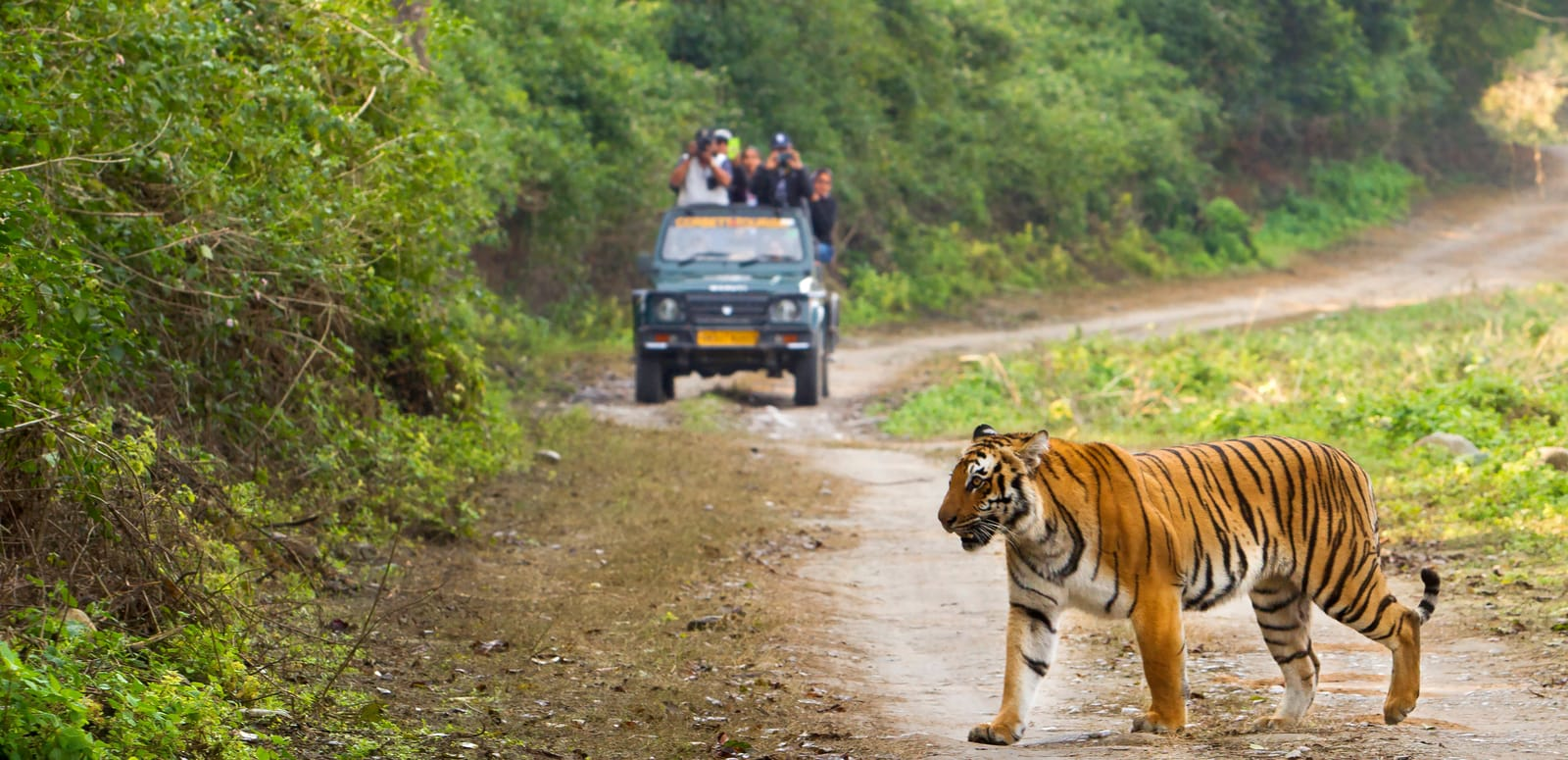 India Jim Corbett Wildlife Safari